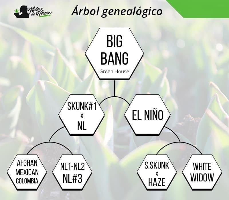 Big Bang cata de marihuana