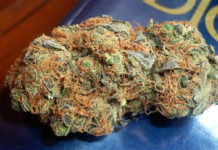 Critical-Mass-Cannabis
