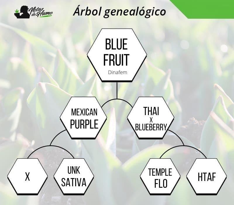 blue fruit dinafem