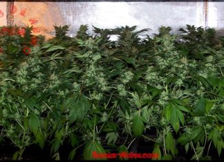 cultivo interior plantas