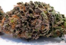 sweet-purple-6