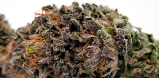 sweet-purple-6