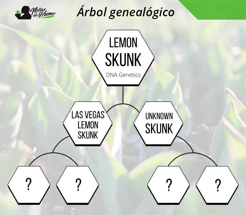lemon skunk arbol