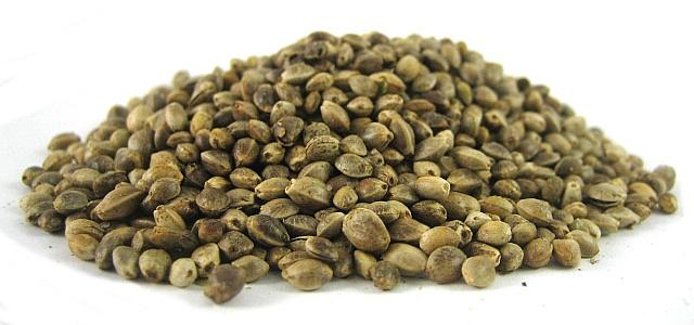 variedades de marihuana semillas