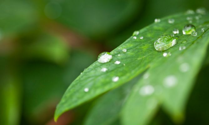cultivo interior humedad