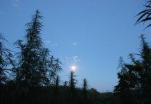 cultivar con la luna