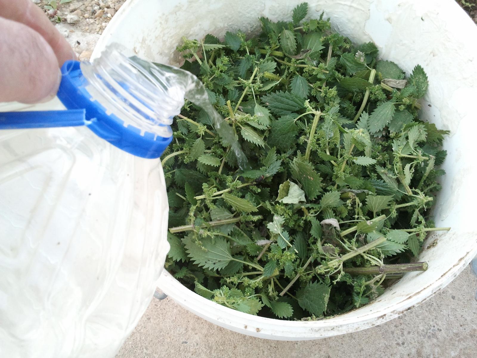 Abonos org nicos para cultivos de marihuana - Abono organico para plantas ...