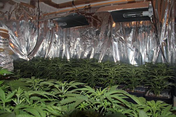 sala de floración de marihuana