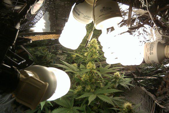 cultivo casero con bajo consumo