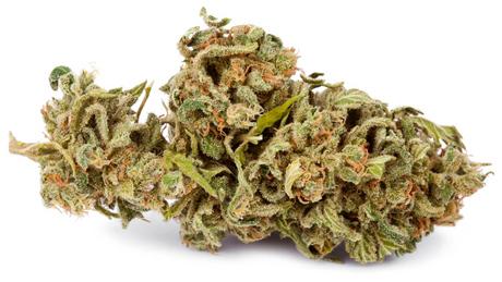 cogollo seco de marihuana