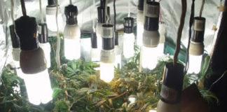 luz para cultivar marihuana