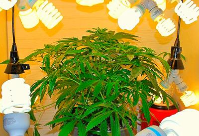 planta-con-bajo-consumo