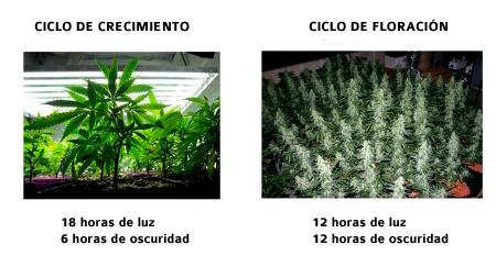 Marihuana 12-12