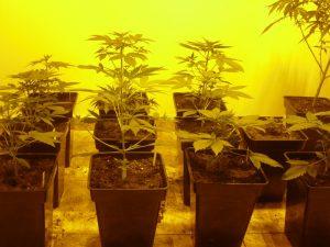 como utilizar correctamente los fertilizantes foto crecimiento