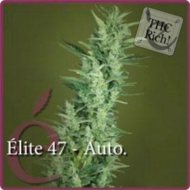 como cultivar marihuana en invierno foto de elite 47