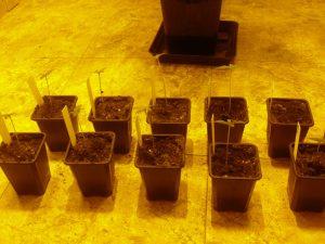 Como utilizar correctamente los fertilizantes foto germinacion