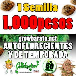 growbarato.net pone sus semillas a 1.000 pesos en chile