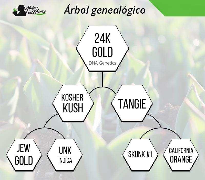 24k gold dna genetics tree