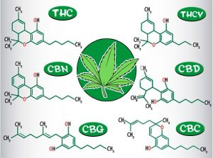 efectos de la marihuana cannabinoides