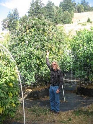 como cultivar marihuana en maceta