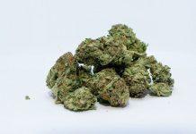 como secar marihuana