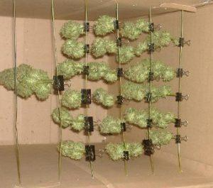 como secar marihuana en caja de carton