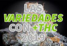 cannabis con mas thc