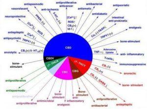 la actualidad de la marihuana medicinal