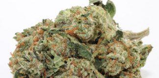 marihuana ak 47