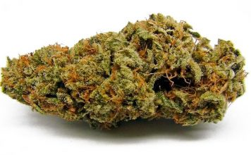 amnesia haze review