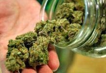 mejores marihuanas para interior