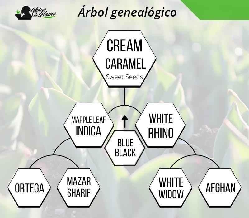 arbol cream caramel