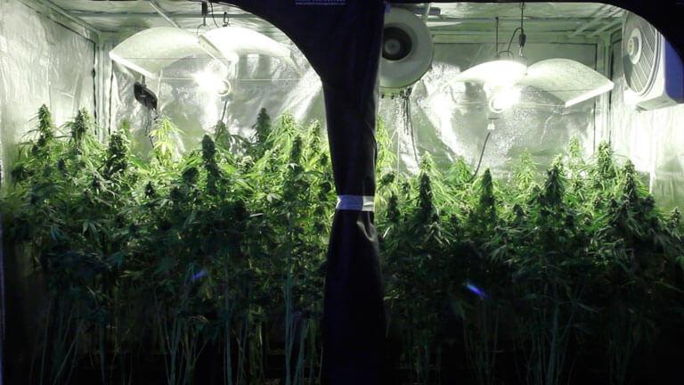 armario de cultivo indoor