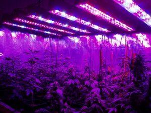iluminación indoor