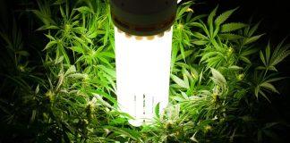 lamparas de bajo consumo