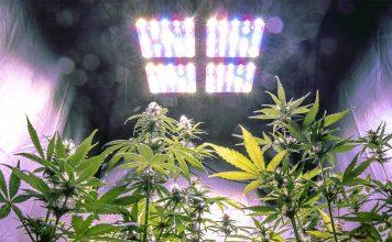 iluminación led para cultivo indoor