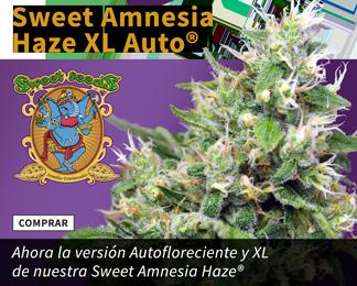 AmnesiaHazeXL