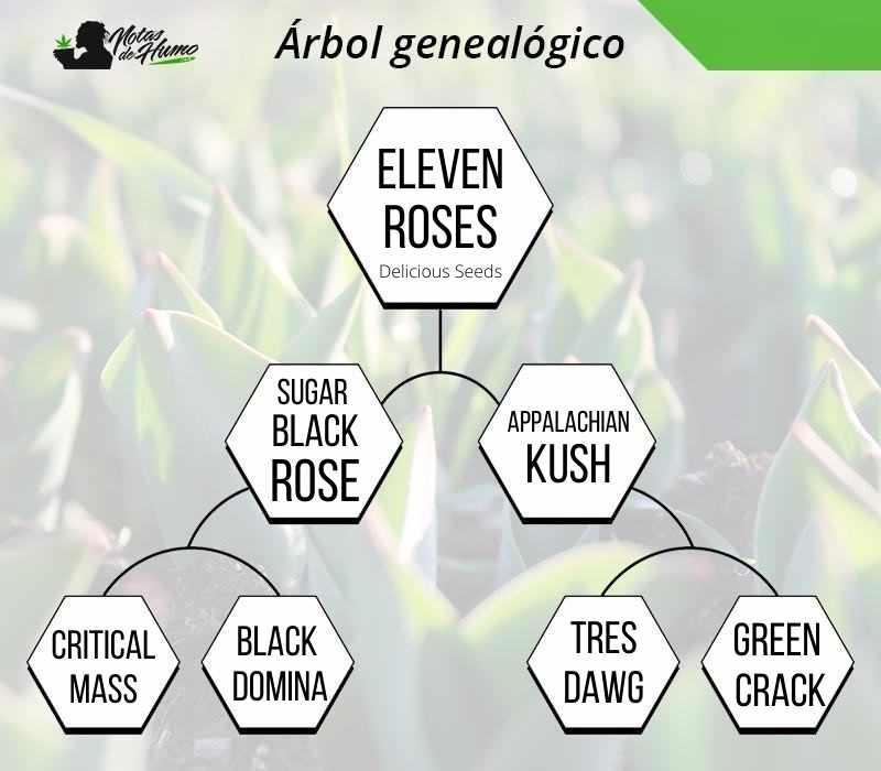 eleven roses arbol