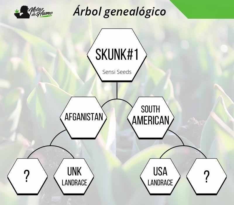skunk 1 sensi seeds tree