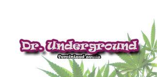 dr. underground seeds