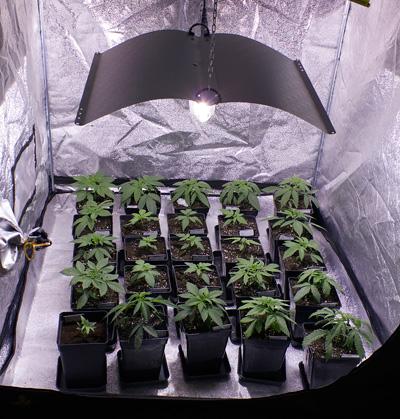 armario de marihuana