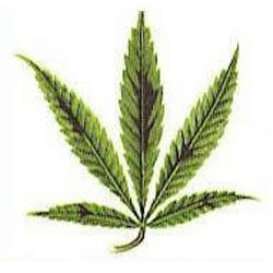 hoja marihuana fosforo