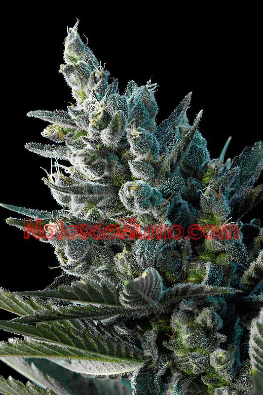 pakistan chitral kush review