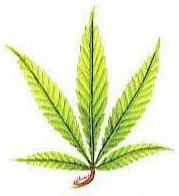 hoja marihuana potasio