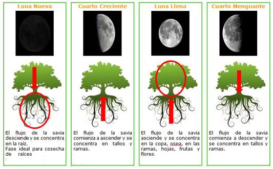 Cultivo de marihuana y fases lunares for Ciclo lunar julio 2016