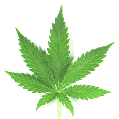 infusion marihuana cannabis