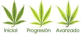 marihuana falta nitrogeno