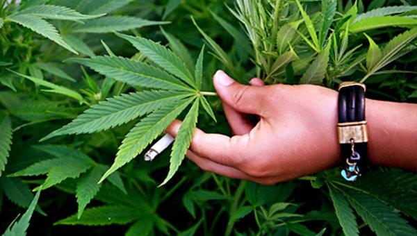 olor de hoja de marihuana