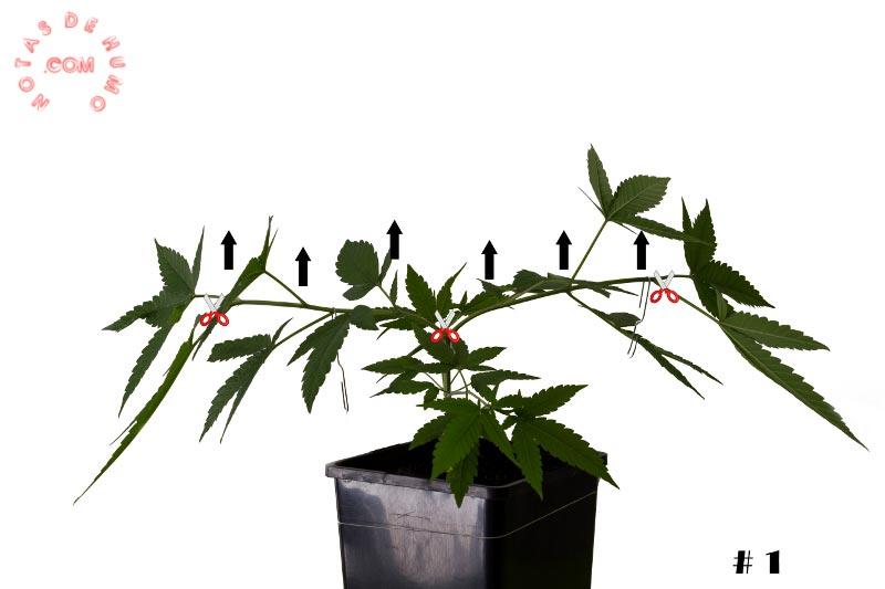 planta madre moldeada