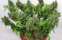 planta en floración